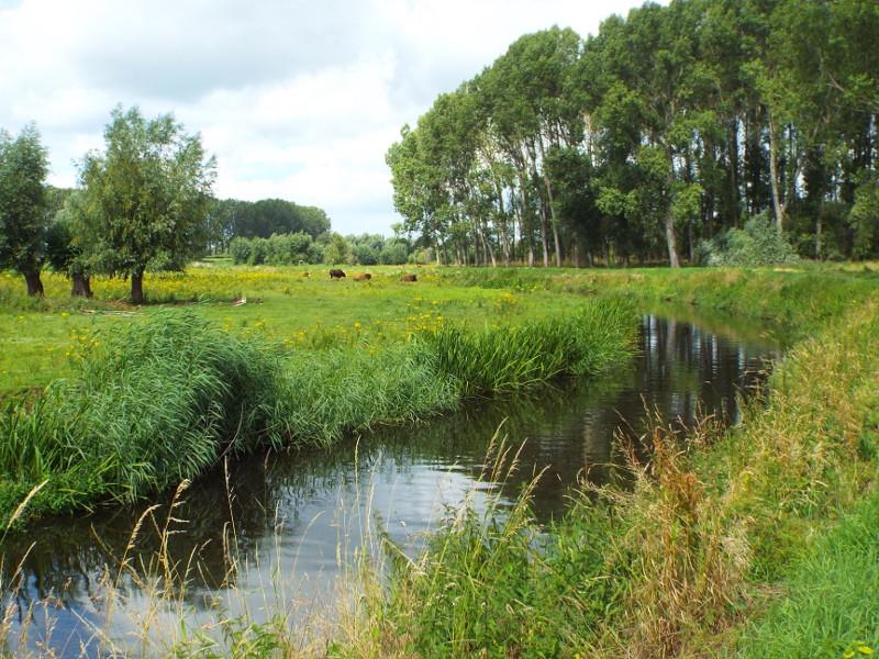 Het riviertje de Aa in de lente