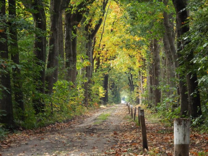 Pad in herfstkleuren
