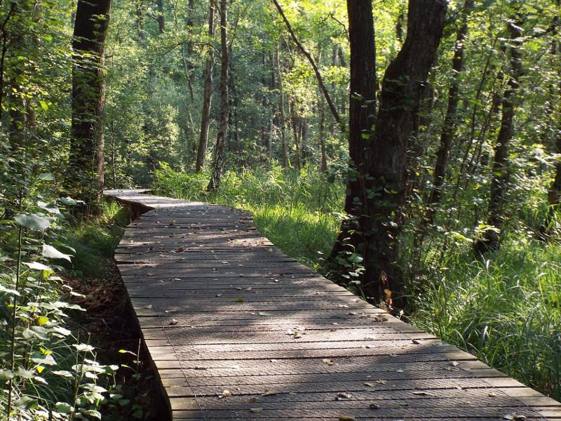 Knuppelbrugje in het beekdal van de Rode Beek