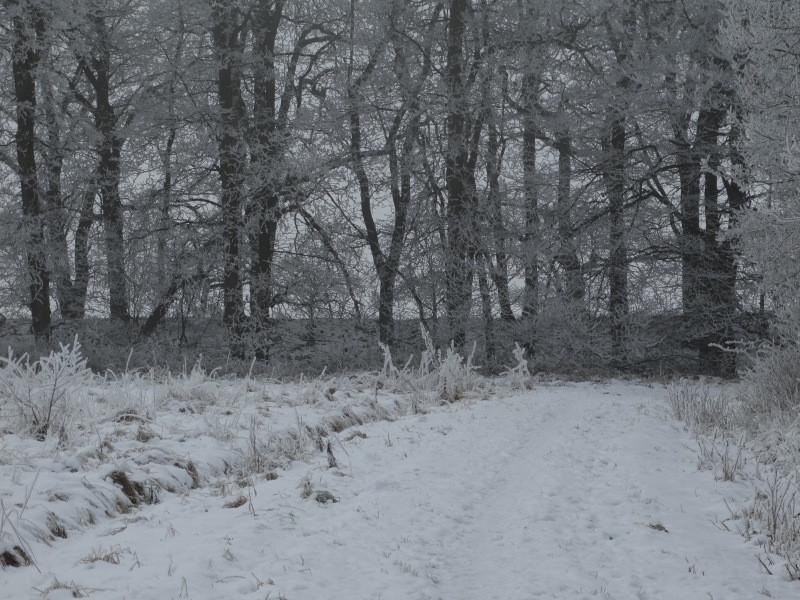 Zicht op de Leidijk in de winter