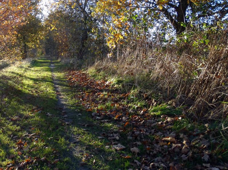 Een pad langs de Ruige Berg