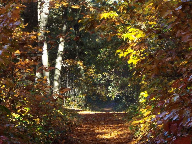 Het landgoed nu in de herfst