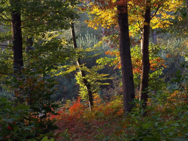 Herfst in de Groote Slink