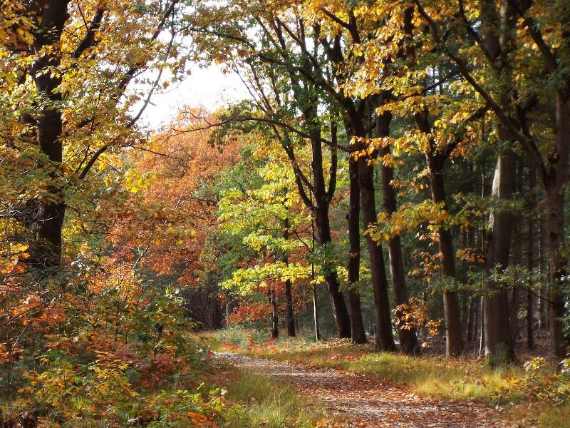 Pad met herfstkleuren