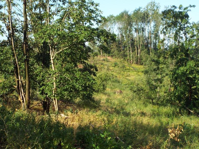 Beboste heuvel bij het Keelgras