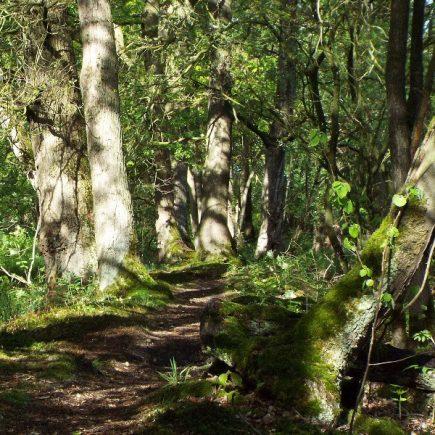 Wandelroute Grotel-tocht, te Bakel
