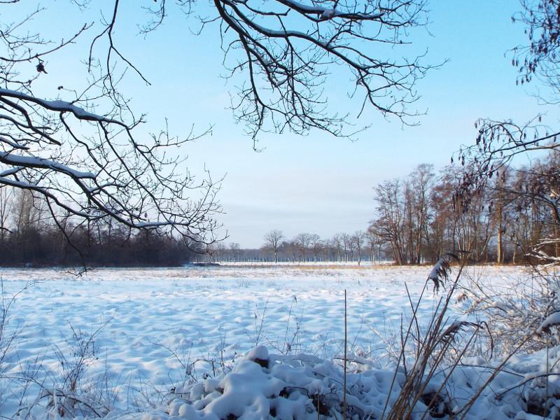 Uitzicht over besneeuwd grasland