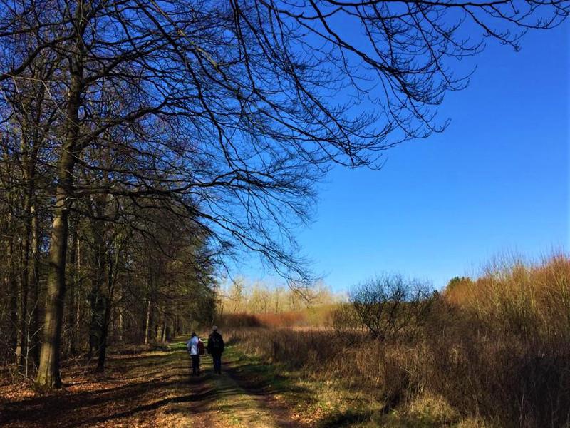 Wandelaars langs de bosrand