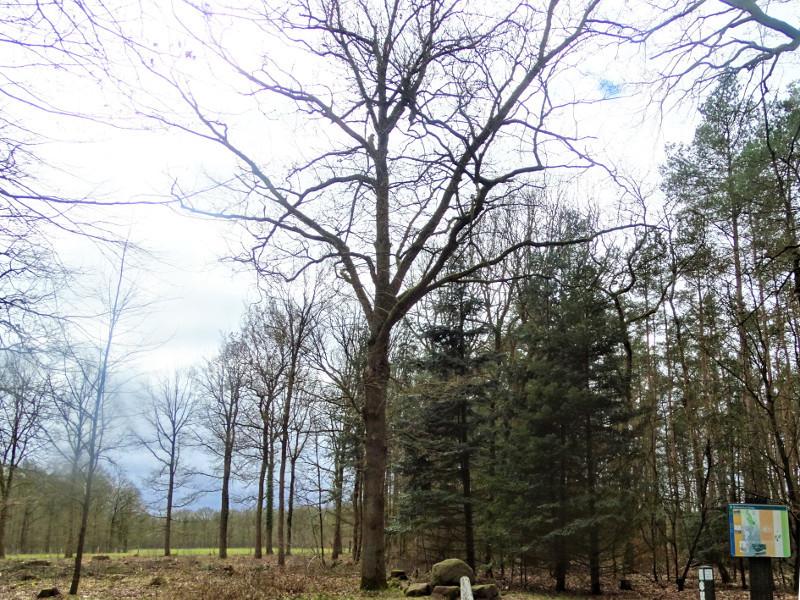 De Beatrixboom