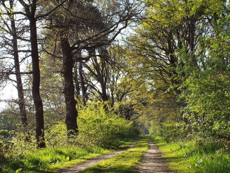Pad door de voormalige Sonse Heide