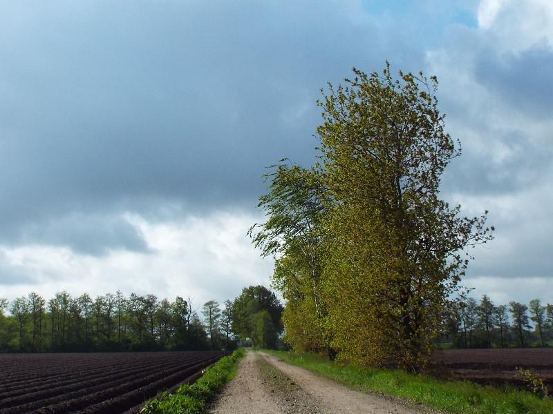 Pad door landbouwgebied