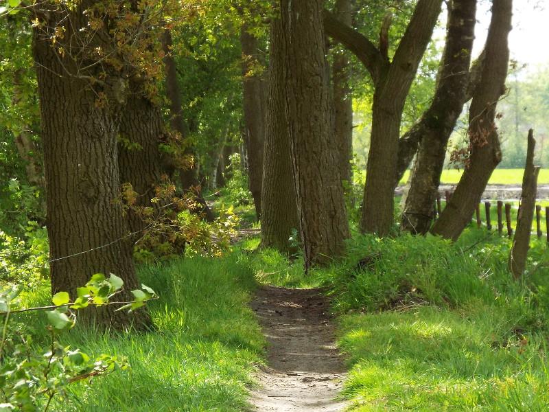 Smal pad aan de rand van het Broemeerbos