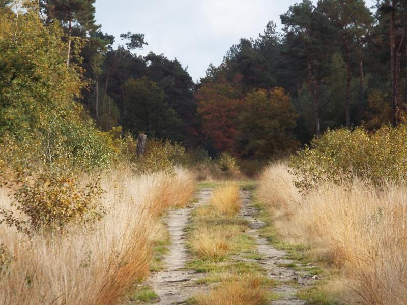 Pad door de Peelse Heide