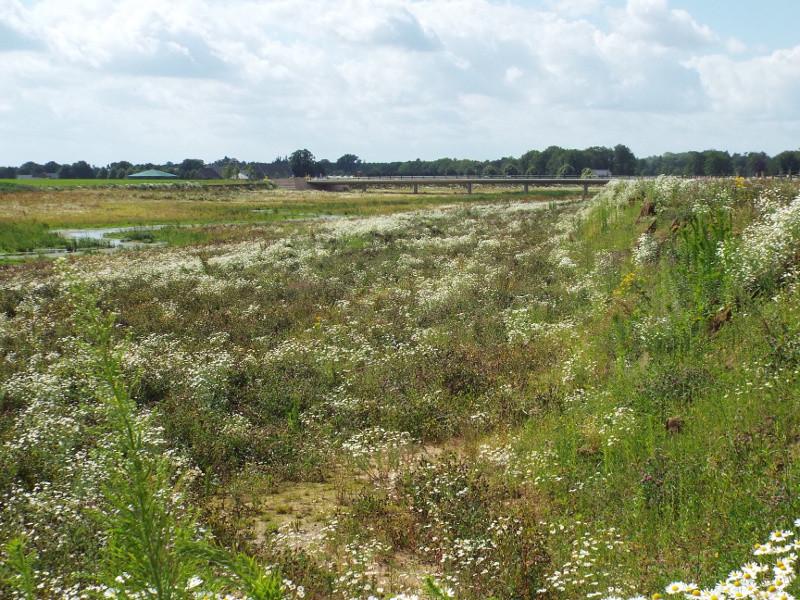 De oude Maasarm bij Blitterswijck met rechts de steilranddijk