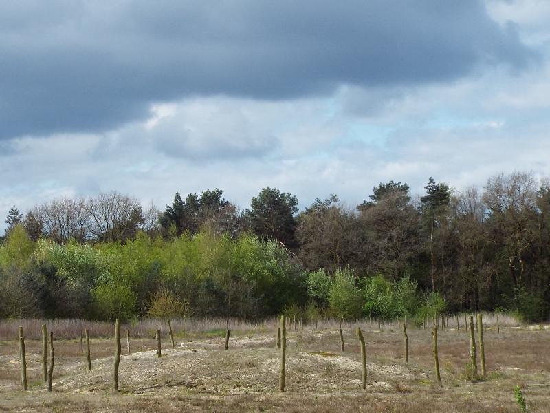 Grafheuvelveld van de Maashorst