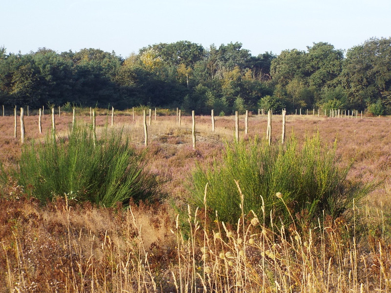 Grafheuvelveld het Vorst(in) van de Maashorst