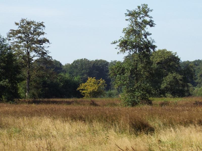 Natte graslanden in omgeving van het beekje de Venloop